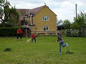 Cricket in field